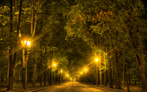 road, trees, night, lights