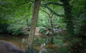 潆, 森林, 树, 性质