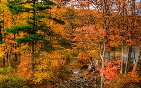 autumn, forest, lake, trees, nature