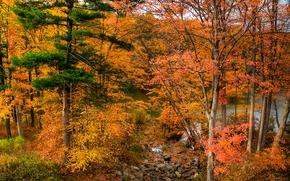 otoño, bosque, lago, árboles, naturaleza