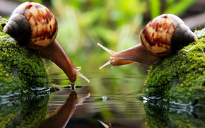 Two snails in water drinking water, reflection, waves, horns, greens