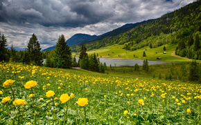 Bavaria, Germany, Bayern, Germany, meadow, Flowers, lake, forest, valley, landscape
