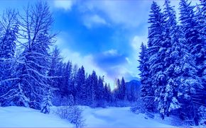 invierno, Montañas, árboles, paisaje marino