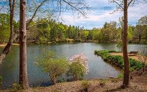 парк, пруд, деревья, пейзаж