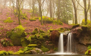 forest, trees, autumn, waterfall, stones, moss