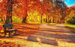 park, trees, A bench, bench, footpath, TRACK, foliage, Indian summer