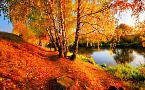 Brzozowy, charakter, jesień, rzeka, drzew, listowie