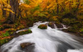 las, drzew, jesień, rzeka, charakter