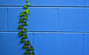 wall, plant, TEXTURE
