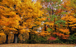 autumn, park, trees, nature