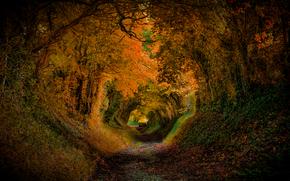 jesień, droga, drzew, tunel, charakter