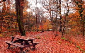 осень, парк, лес, деревья, природа