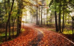 autunno, stradale, foresta, alberi, nebbia, paesaggio