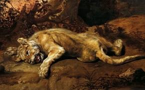 Art, immagine, pittura, Frans Snyders, La Leonessa, leonessa, bugie
