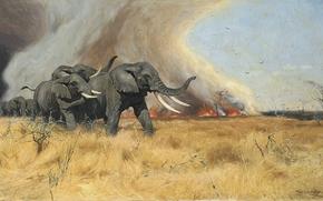 Art, immagine, pittura, Friedrich Wilhelm Kuhnert, Fuggire dal fuoco, elefanti.