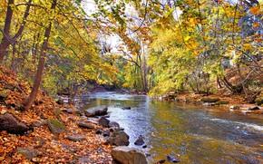 jesień, las, rzeka, drzew, charakter