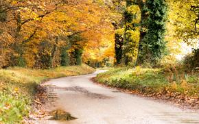jesień, droga, drzew, charakter