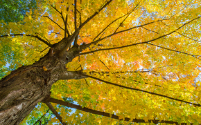 autunno, albero, natura