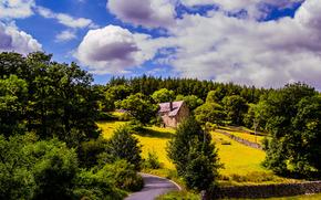 дорога, деревья, домик, пейзаж