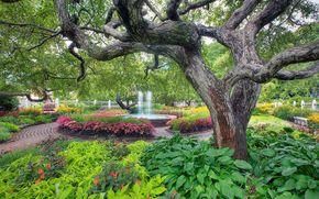 park, garden, FOUNTAIN, trees, flowerbeds, landscape