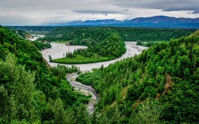 Denali National Park, Alaska, river, forest, trees, landscape