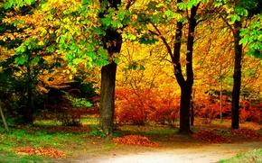 otoño, carretera, árboles, naturaleza