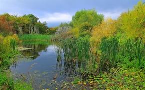 autunno, stagno invaso, alberi, natura