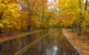 road, autumn, trees, landscape