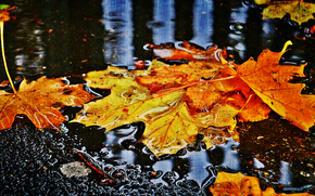 autumn, foliage, asphalt, puddles