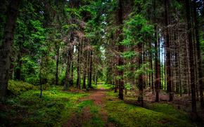 лес, деревья, дорога, природа