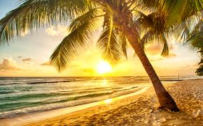 DAWN, mer, Palm, plage, paysage