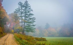 campo, carretera, árboles, niebla, paisaje