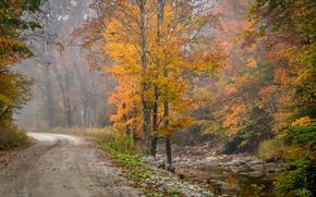秋, 道路, dnrevya, 雾