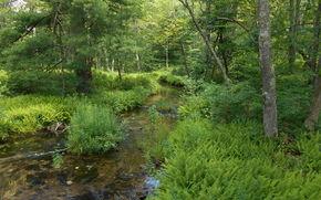 лес, речка, деревья, природа