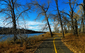 autumn, road, trees, river, nature, landscape