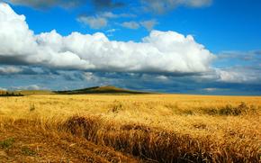 пейзаж, природа, осень, поле, пшеница, сентябрь, страда, уборка, зерно, небо, казахстан, костанай, кокшетау, брещук, колос, желтый, золото, хлеб, жаксы, облако, красиво, степь, целина