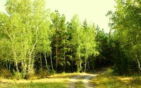 Kazakhstan, Verde, foresta, Marge, radura, betulla, verdi, Kokshetau, stradale, radura, Giorno, Luglio, estate, bellezza, silvicoltura