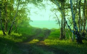 foresta, Marge, radura, silvicoltura, riserva, Shchuchinsk, betulla, Verde, mattinata