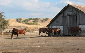 амбар, лошади, конь, склад, село, деревня, боровое, казахстан, брещук, лето