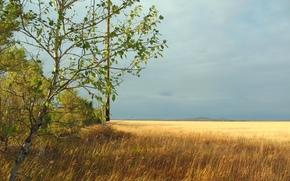 paisaje, naturaleza, estepa, campo, trigo, oído, cinturón de bosques, latitud, distancia, cielo, otoño, Kazajstán, suelo virgen, Kostanay, Kokshetau, zhaksy