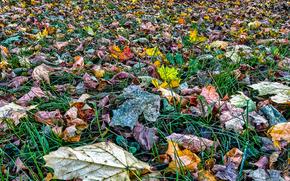 grass, foliage, autumn