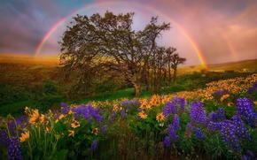 поле, цветы, радуга, дерево, пейзаж