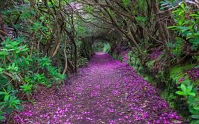 Reenagross парк, Kenmare, Ирландия, деревья, дорога, пейзаж