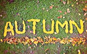 лист, осень, autumn