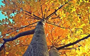 toamnă, listă, copac, toamnă, frunze