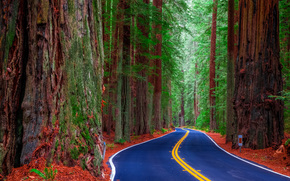 Redwood State Park, California, United States, road, forest, trees, nature