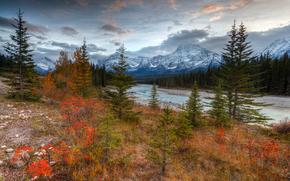Autumn Vibrance, Athabasca River Valley, Jasper National Park