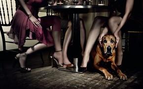 стол, ресторан, девушки, собака