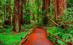 лес, деревья, дорога, пейзаж