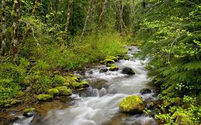лес, деревья, река, природа